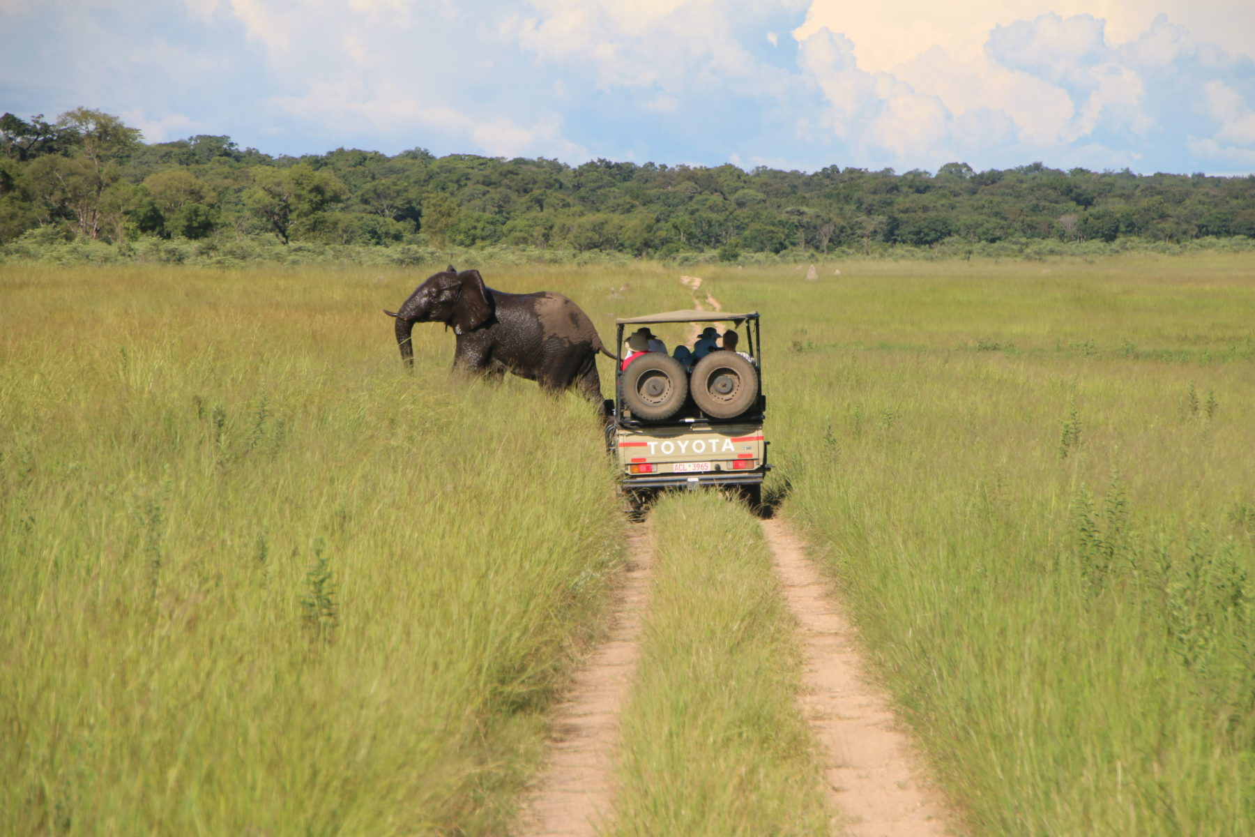 Tourists in a vehicle driving towards an elephant
