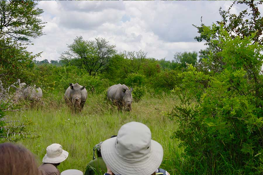 Tourists taking pictures of Rhino while on safari
