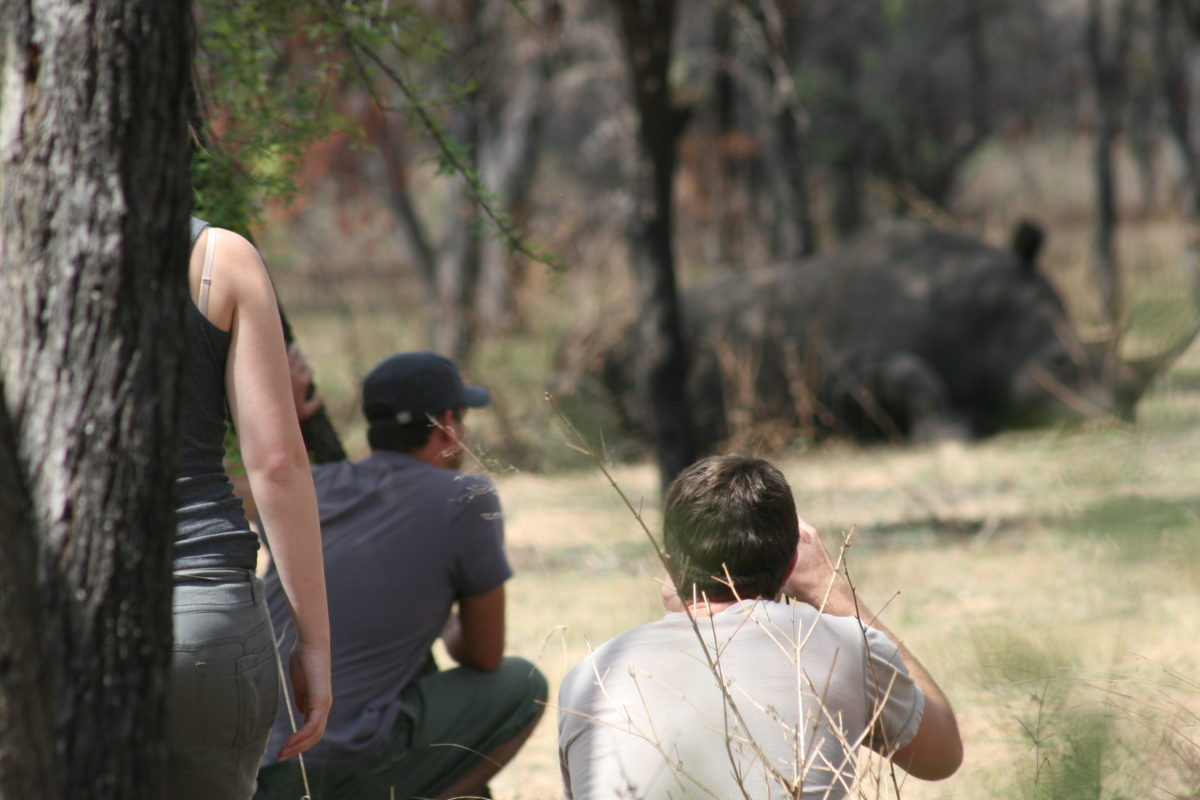 Tourists on safari, taking pictures of Rhino