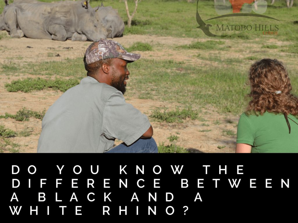 Do You Know the Difference Between a Black and White Rhino?