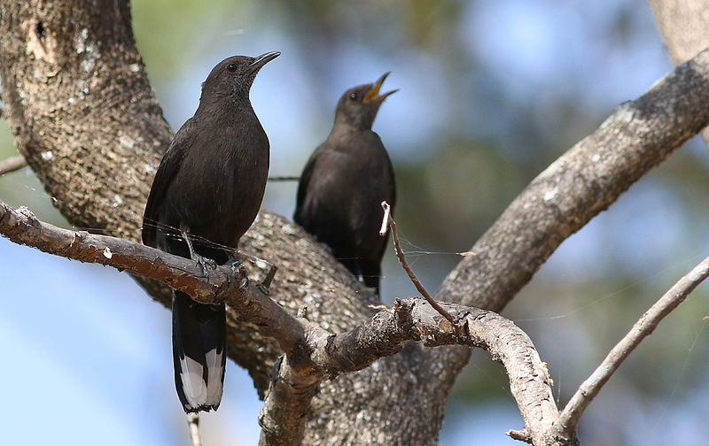 5 Birds To Watch In The Matobo Hills