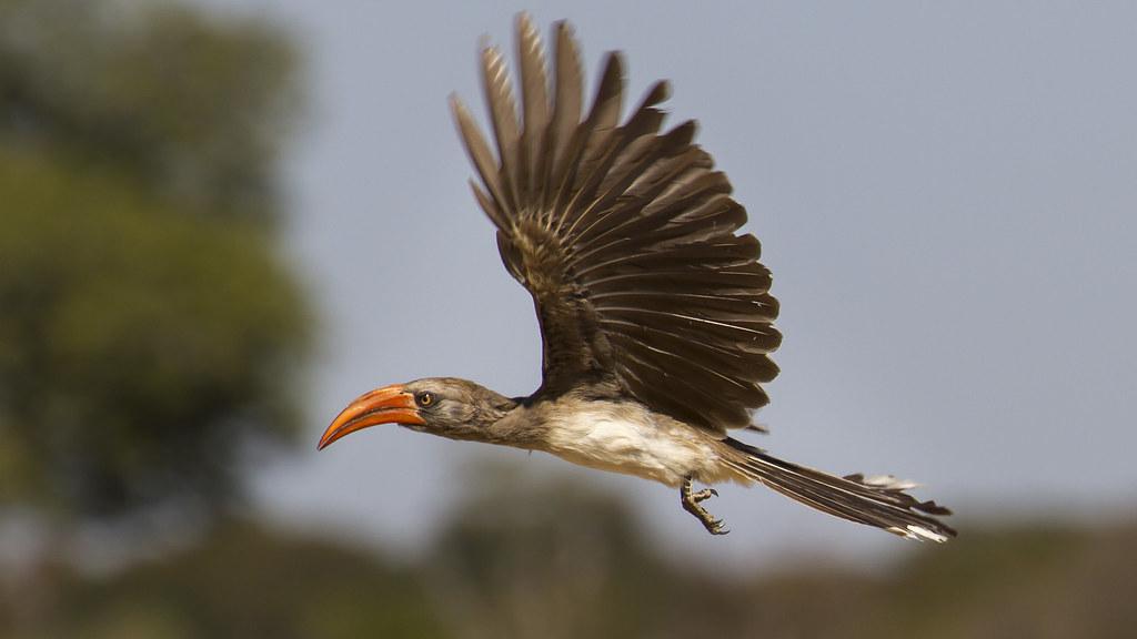 5 Birds To Watch In The Matobo Hills